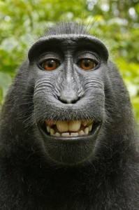 Affe Selfie Wikipedia