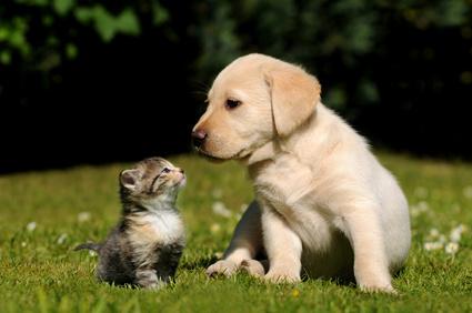 Hundewelpen und Katzenbabys